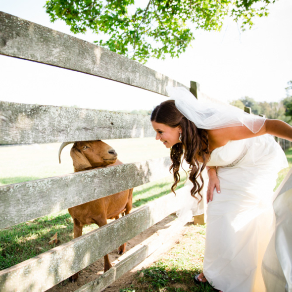 Bride at Springton Manor Farms