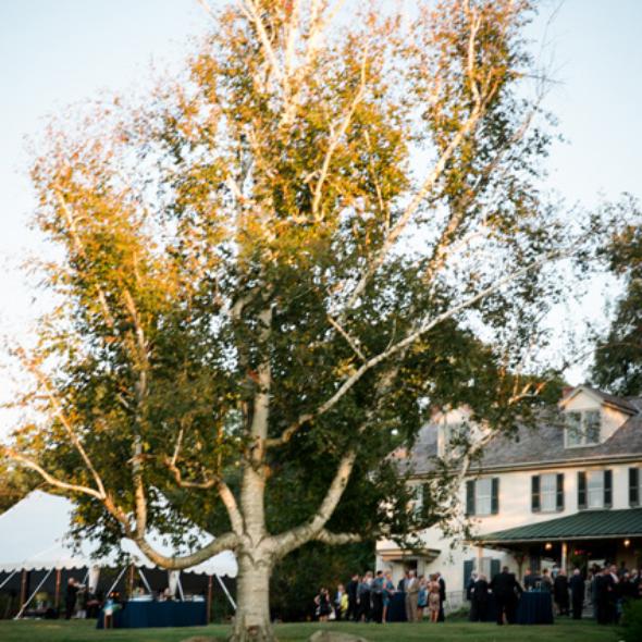 Wedding at Springton Manor Farms