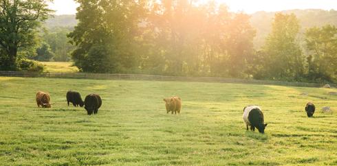 The Springton Manor Farm